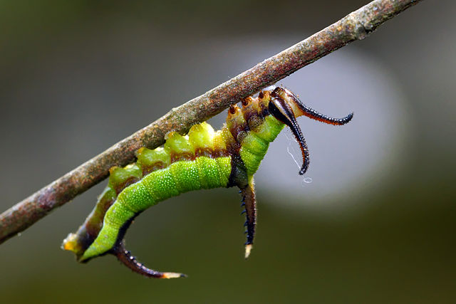 17.10.04 Larva bonita