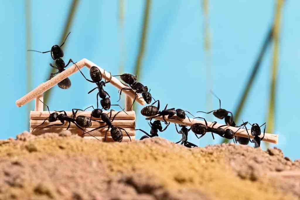 Esta imagem possuí um atributo alt vazio; O nome do arquivo é formigas.jpg